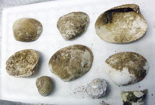 シジミ発掘190328.JPG