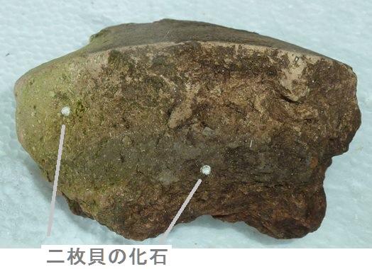 七輪土器 貝殻の化石.JPG